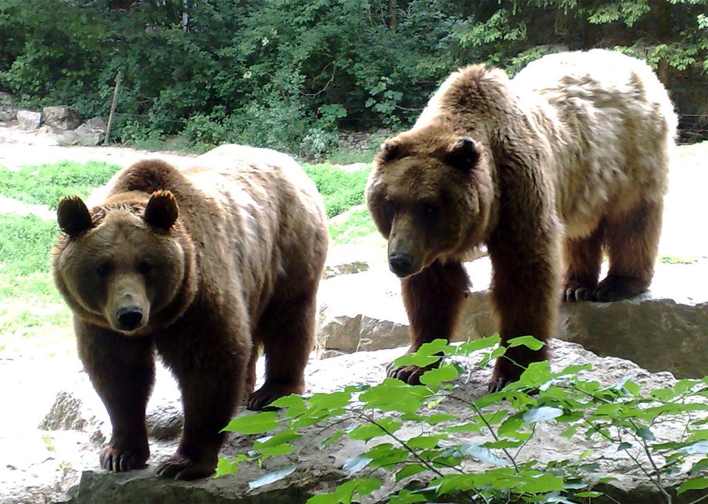 Tierpark Bad Mergentheim - Braunbären